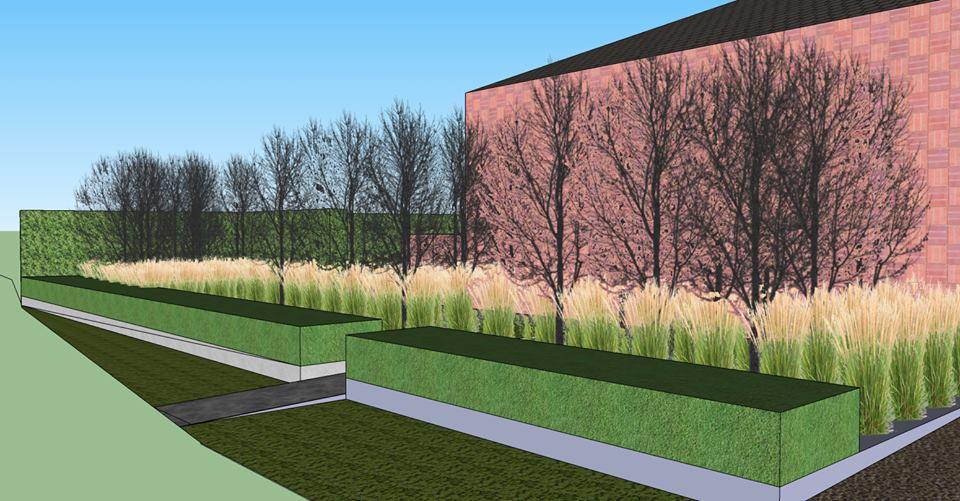 Tuinontwerp Gullegem - Voortuin met beuken, siergrassen en haag, achtertuin met hagen, vaste planten en bomen