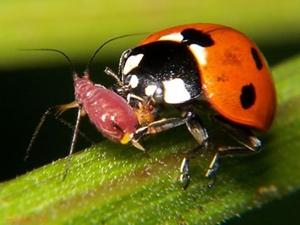 Insecten inzitten tegen insectenplagen als ecologisch tuinonderhoud